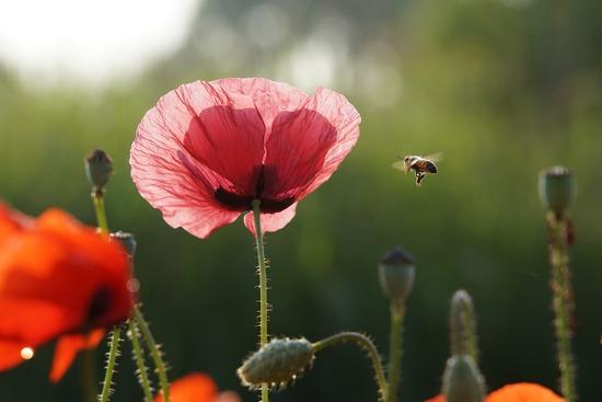 Le monde survivra-t-il aux abeilles ?